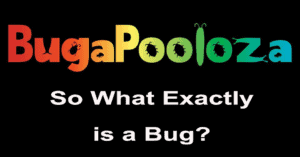 what is a bug 2